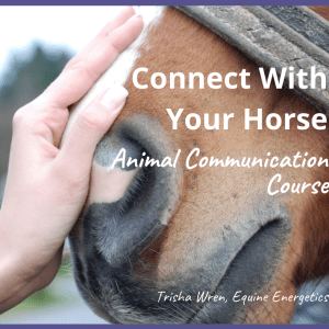 animal communication self study course