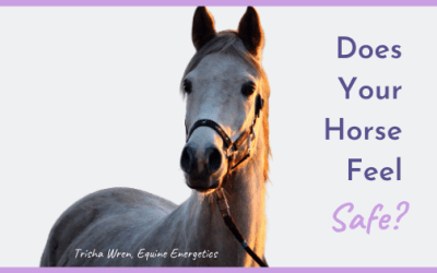 Does your horse feel safe?