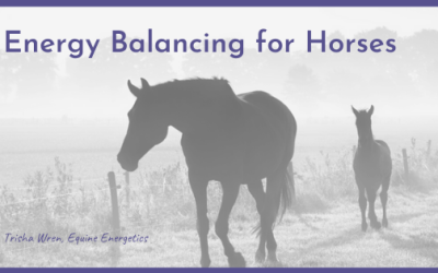 Energy Balancing for Horses