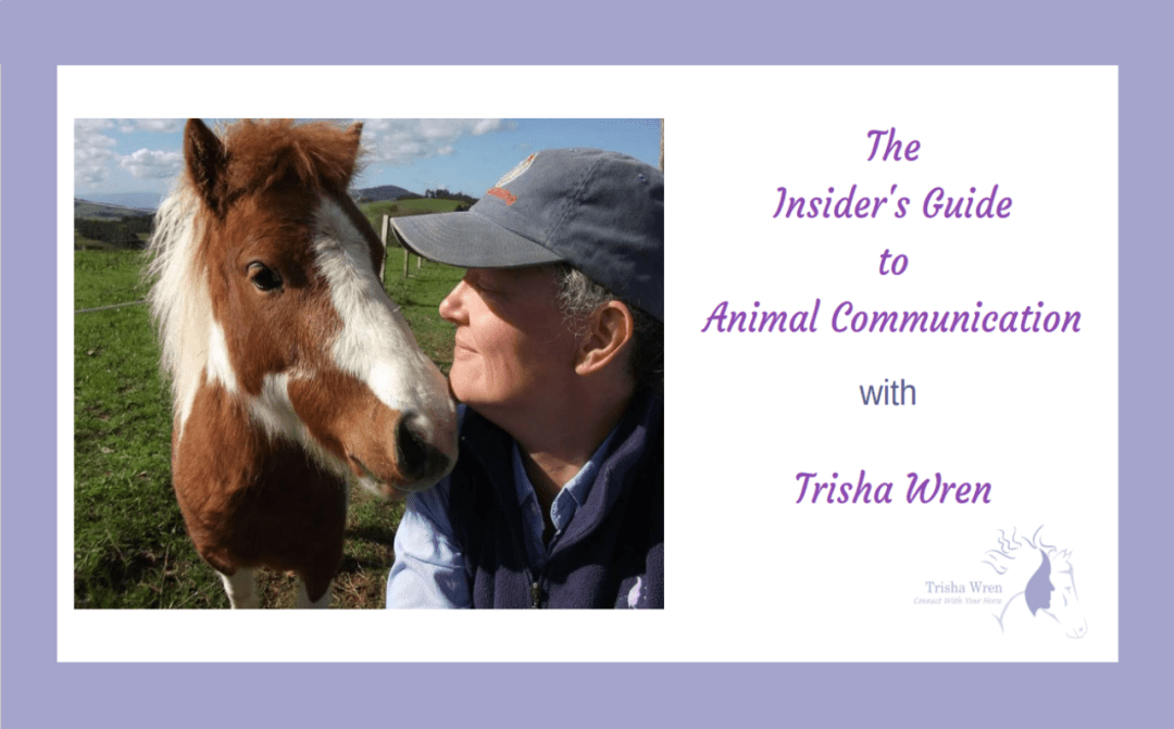 Replay of the Insiders Guide to Animal Communication webinar