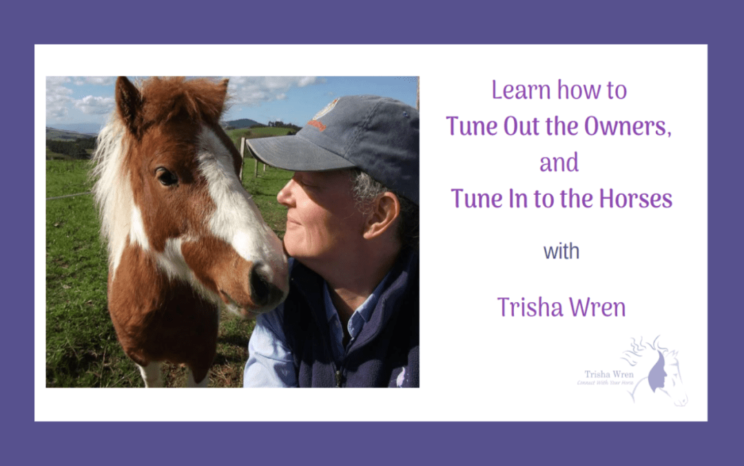 Tune in to horses webinar recording