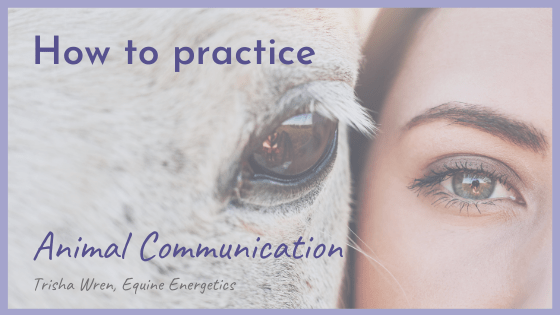 How to Practice Animal Communication