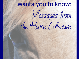 horse oracle cards