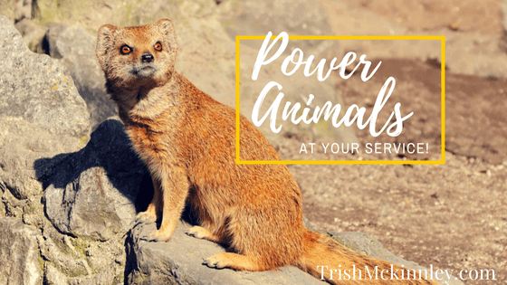 Power Animals at your service!