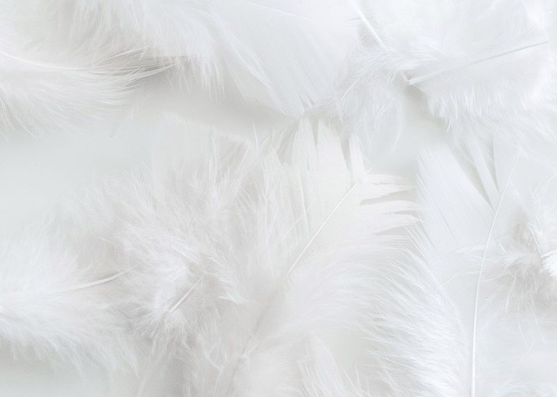 Close up of feathers