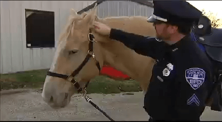 Horse_1448253008217.png