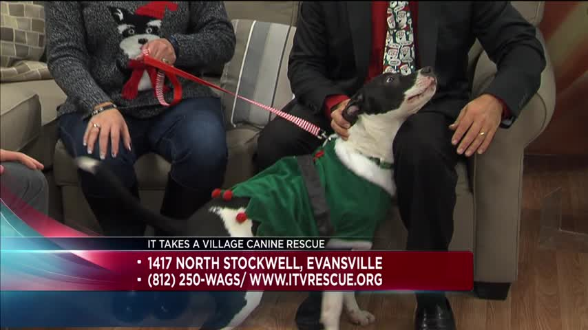 Pet of the Day (12/22/16)