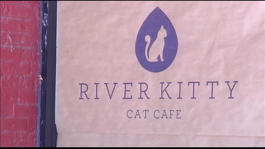 River Kitty Cat Cafe Moving Forward_62883105