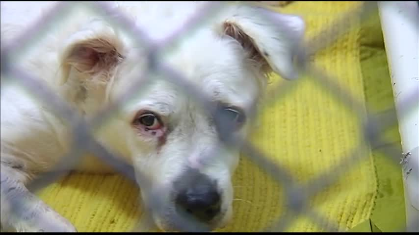 Advocates Call for Stronger Animal Welfare Laws_78037161