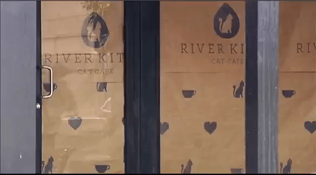 River Kitty Cat Cafe