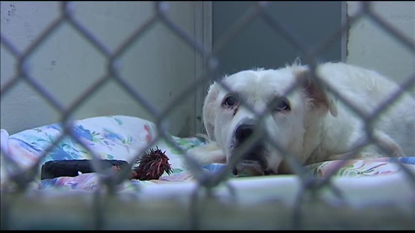 Advocates Working on Creating Animal Cruelty Registry_28360814