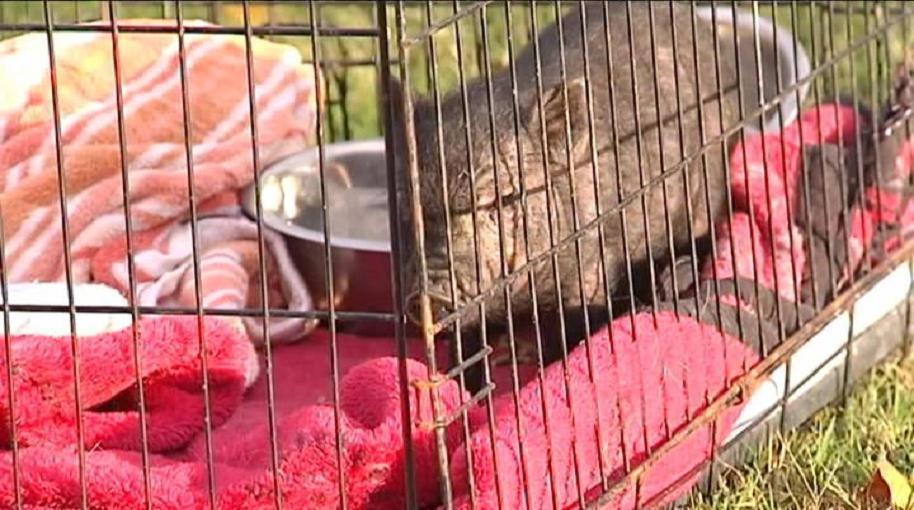 Henderson County animal cruelty investigation_1509057361340.jpg