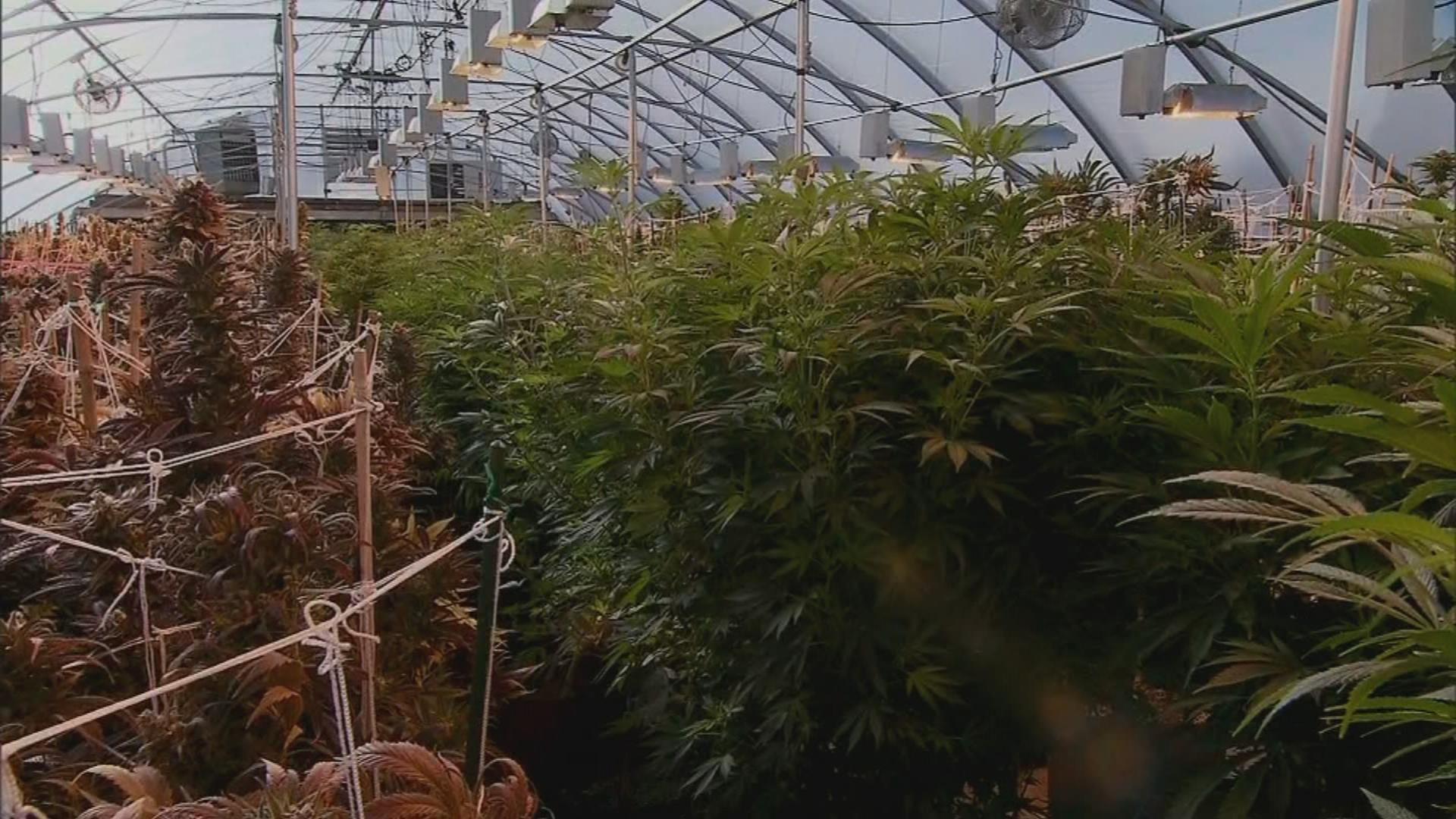 Indiana legislation on marijuana is dead
