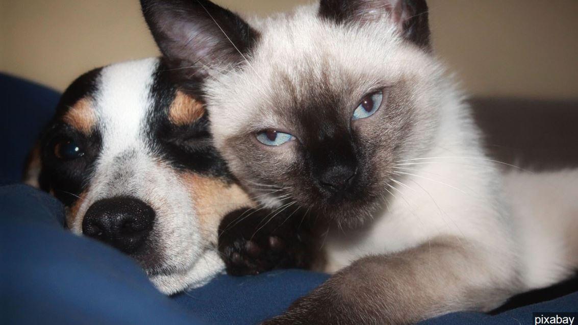 dog cat FOR WEB - pixabay_1549455909630.JPG.jpg