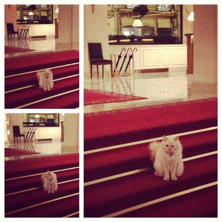 Paris_HotelBristol_Cat