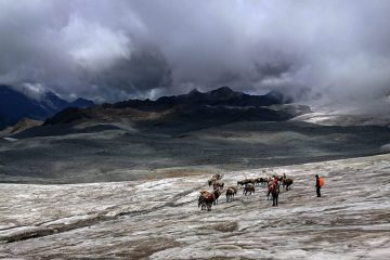 Mule Train and Glacier Stretch