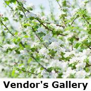 Vendors Gallery