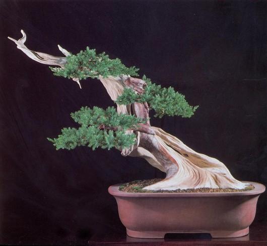 Bonsai cần được thay chậu theo thời gian và sự sinh trưởng