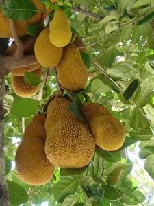 trái cây mít