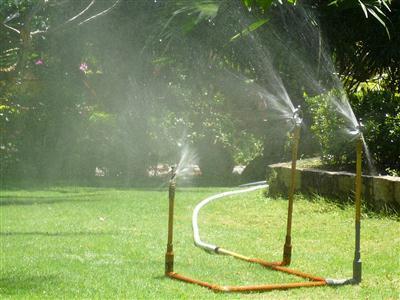 cây cảnh nên có hệ thống tưới để tiện chăm sóc và nước thấm đều