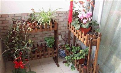 Giá trồng cây bằng gỗ thiết kế 2 tầng