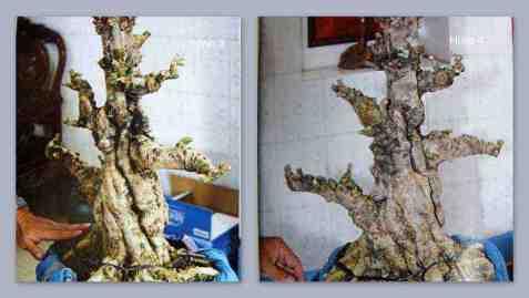 Xây dựng tác phẩm Bonsai - Hình 3 & 4