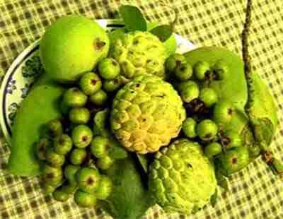 quả cây Sung