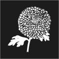 Chrysanthemum Logo 1