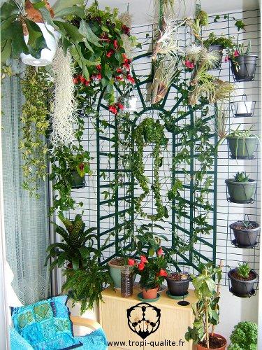 Plante Pour Veranda Awesome Download Und Regeln Fr Die