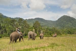 Ulu_Masen_elephant_patrol_Pidie