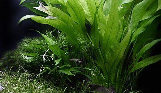 aquarium-plants-4329107