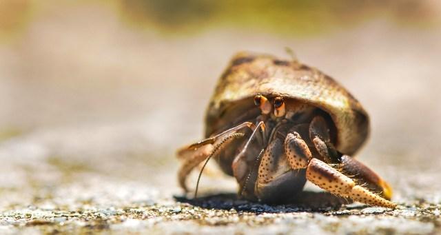 Complete Hermit Crab Food List 1