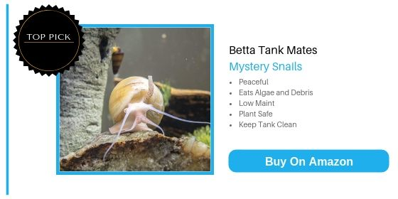 Betta Tank Mates: Huge List Of 29 Fish That Can Live With ...