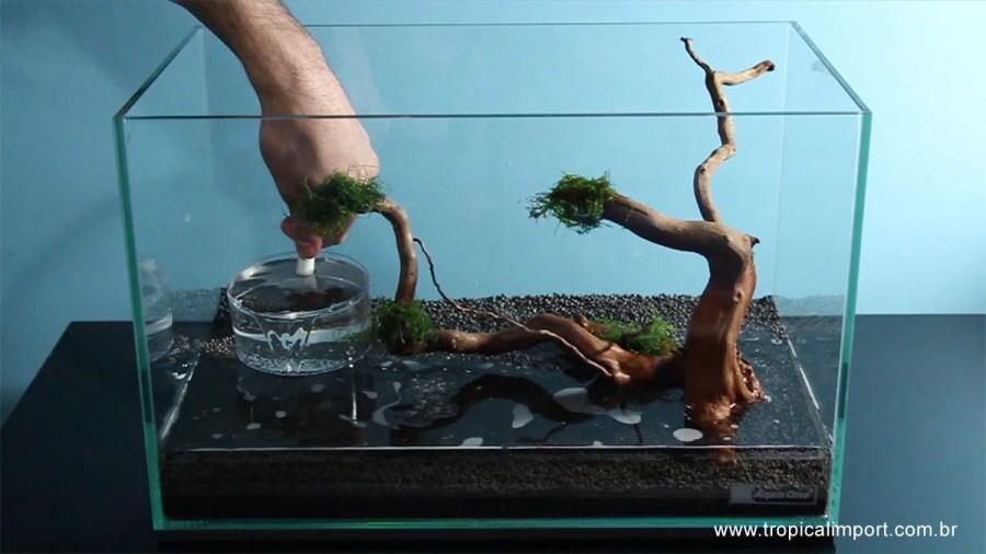Colocando o substrato no aquário