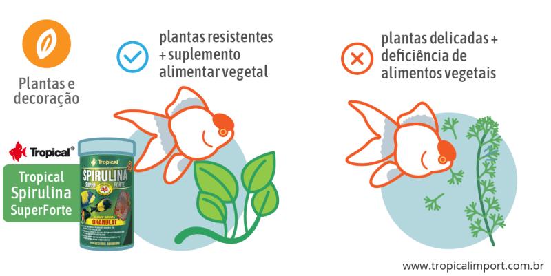 Plantas e decoração no aquário de kinguios
