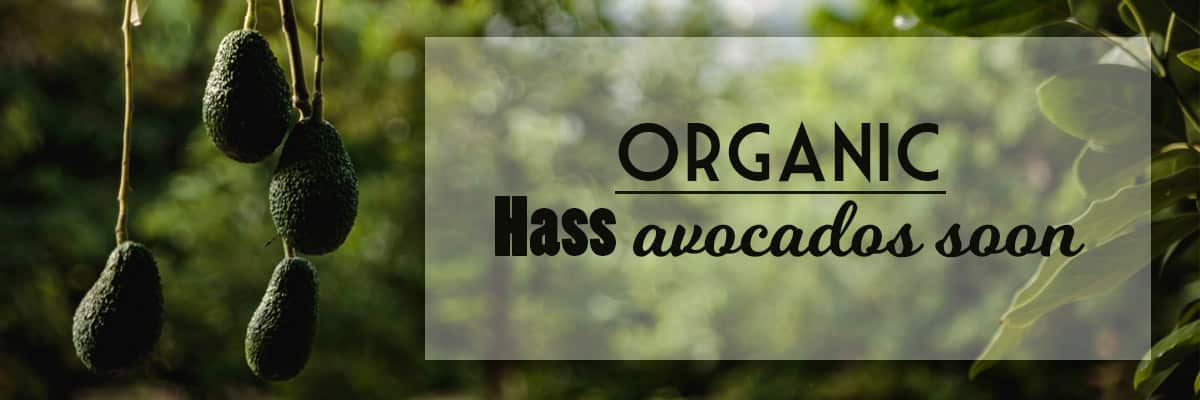 Buy Organic hass avocados