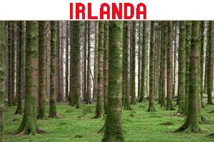 Miniatura Irlanda
