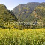 NEPAL, DÍA 4: NGADI A JAGAT