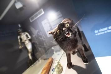 Wat te doen in Koksijde Navigo visserijmuseum opgezette kat
