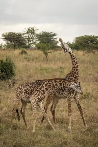 Nairobi National Park © Jonathan Ramael-21