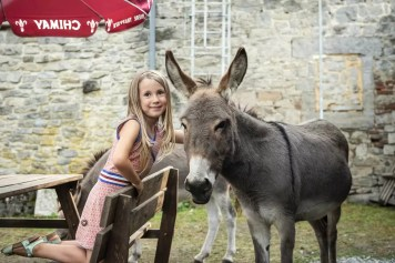 Viroinval - États d'Ânes kind met ezel