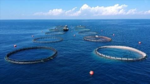 Su ürünlerinde yeni yetiştiricilik alanları belirlendi