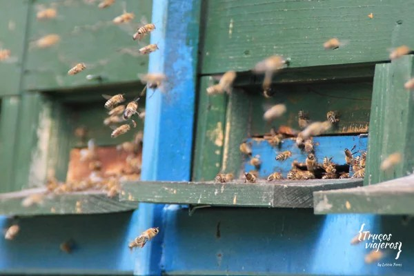 bees-in-slovenia-traditional-behives