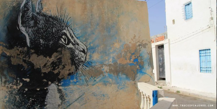 Djerba cat graffiti Tunisia