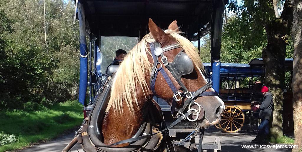 jarveys' horse Killarney Ireland