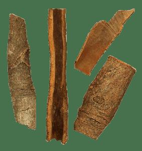 Cinnamomum_aromaticum