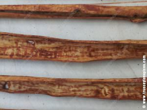 Separated-inner-bark-of-Sri-Lankan-cinnamon