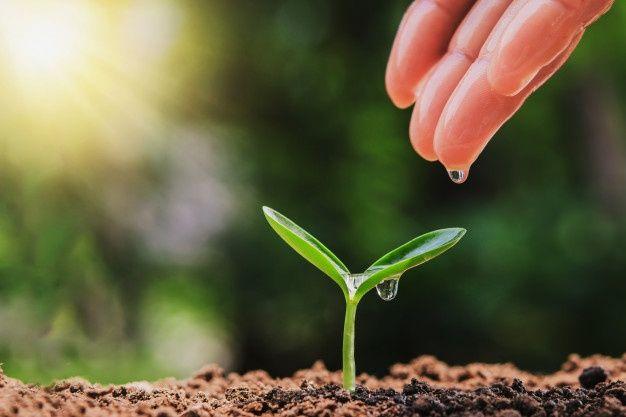 Orgánico, Sostenible, Bio y Eco ¿Sabes diferenciarlos?