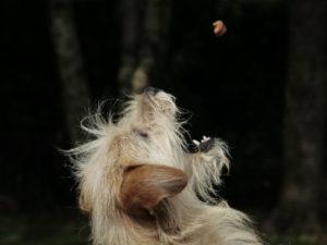 Bug Out Bag Dog Treats