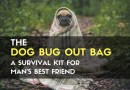 The Dog Bug Out Bag – A Survival Kit for Man's Best Friend
